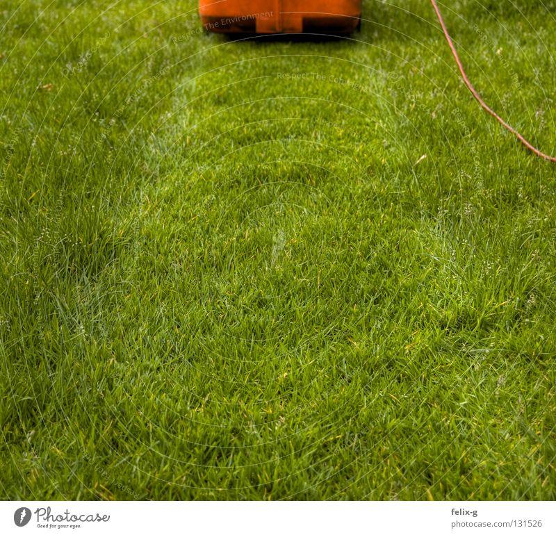 rasierer Rasenmäher Elektrizität grün rot Sportrasen Wiese Blume Garten Park rasenmähen Kabel Kontrast Stoppel Pflanze