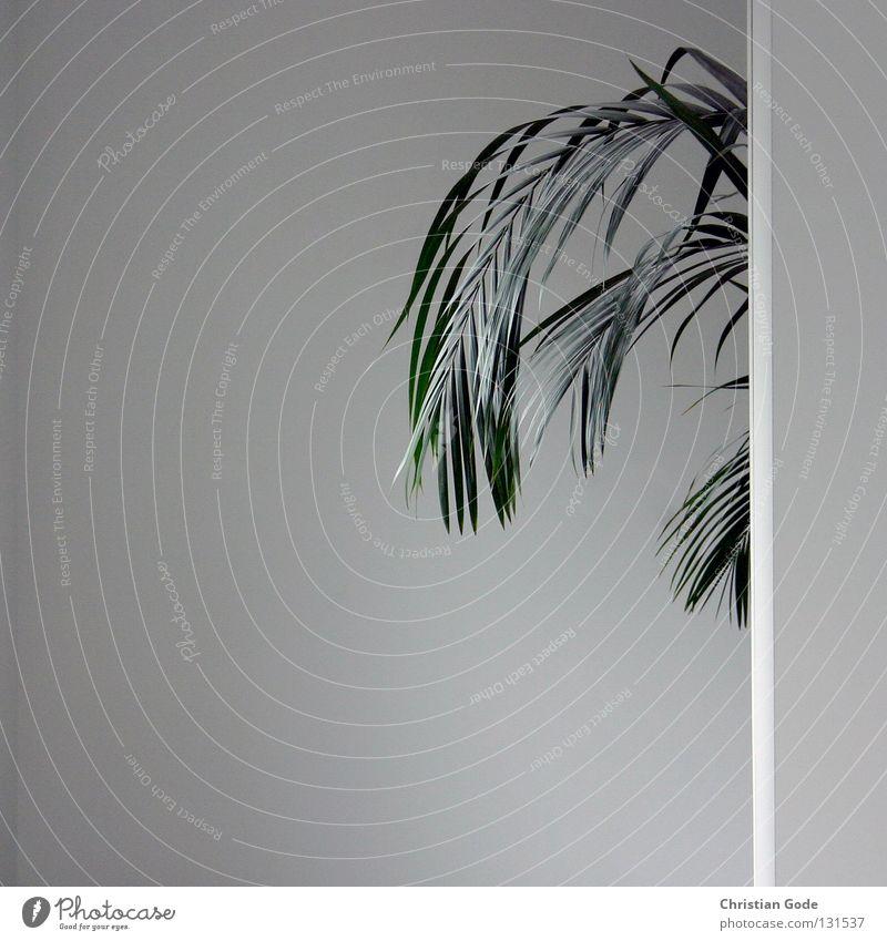 Gewächs Wand Ecke Geometrie weiß neutral Mauer grau schwarz dunkel Mischlicht Menschenleer Dinge Wohnzimmer Flur unten diagonal fantastisch Staub dreckig