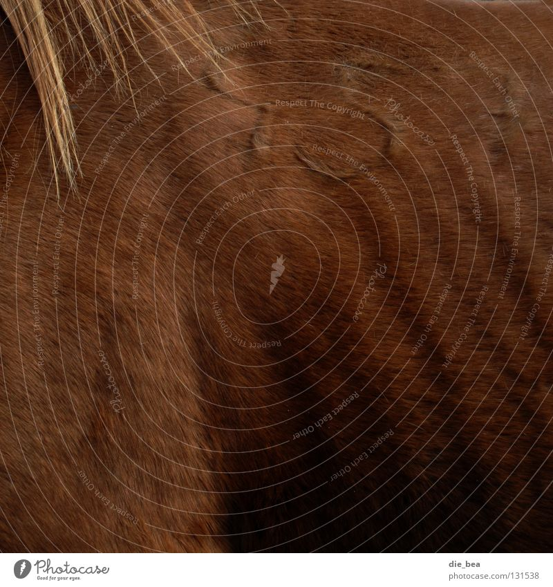 457 alt Haare & Frisuren Pferd Ziffern & Zahlen Fell Zeichen Schulter Säugetier Rippen Mähne