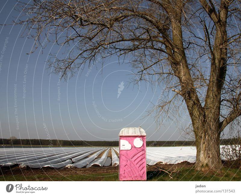 Baum.Haus. Feld rosa Landwirtschaft Ackerbau Brandenburg Miettoilette Spargelfeld