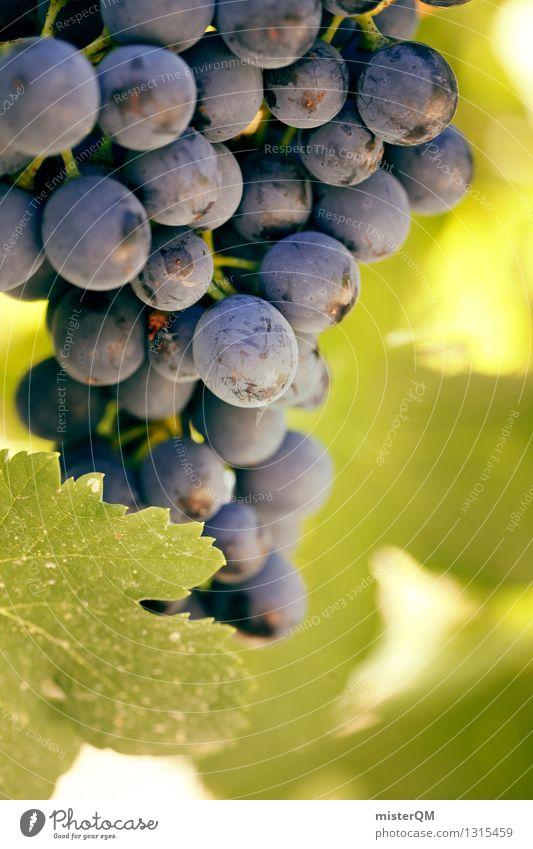 Weinblau. Natur ästhetisch Weinberg Weinbau Weintrauben Weinlese Weinblatt Weingut Rotwein reif Frucht lecker grün Farbfoto Gedeckte Farben Außenaufnahme