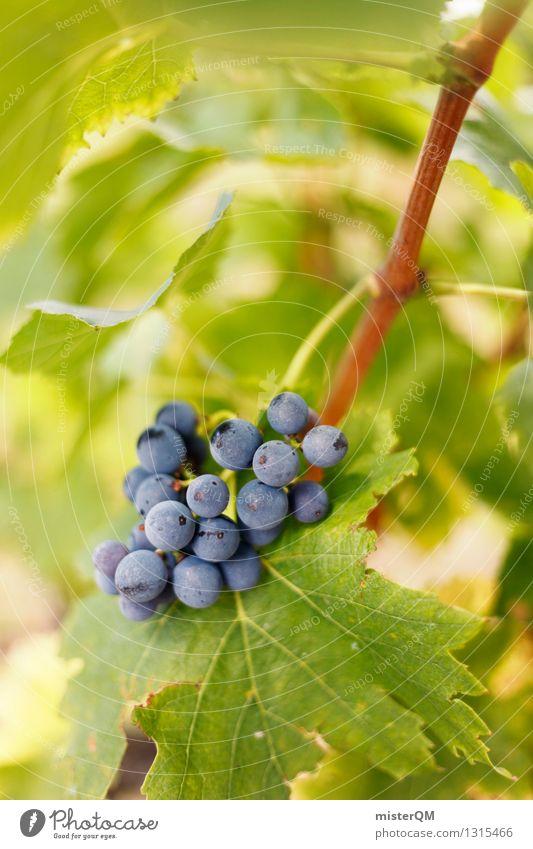 Frühreif. Kunst ästhetisch Wein Weinberg Weinbau Weintrauben Weinlese Weinblatt Weingut lecker Frucht Beeren blau grün Farbfoto Gedeckte Farben Außenaufnahme