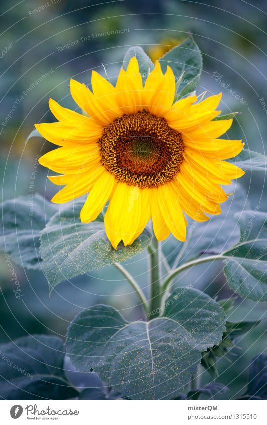 Morgensonne II Umwelt Natur ästhetisch Sonnenblume Sonnenblumenkern Sonnenblumenfeld Sonnenblumenöl Pflanze Landwirtschaft gelb Farbfoto Gedeckte Farben