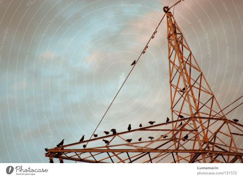 Energieberatung Elektrizität Wolken Strommast Konstruktion Leitung Vogel Krähe Energiekrise Zukunft Versammlung Industrie Himmel Elektrizitiät Energiewirtschaft