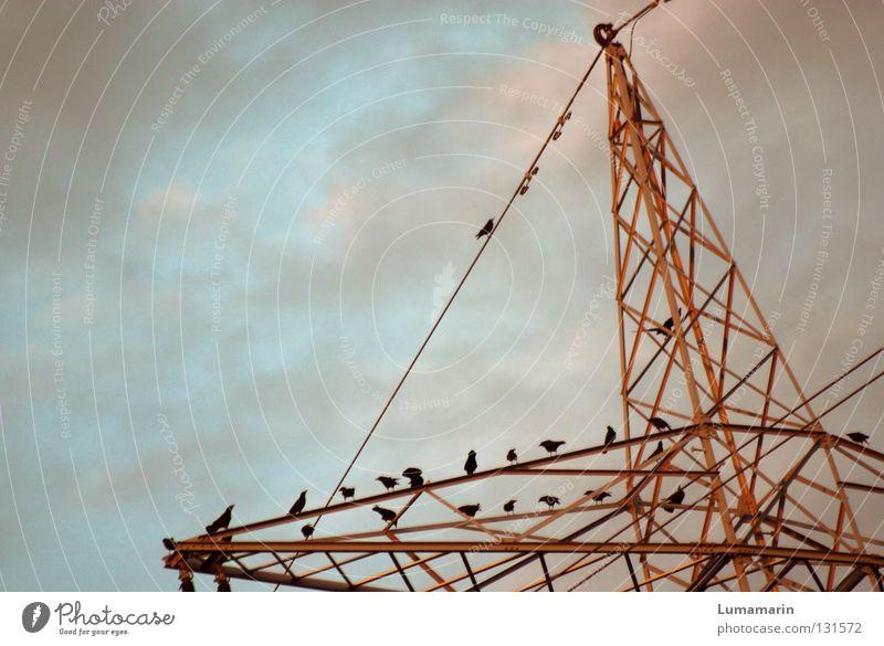 Energieberatung Himmel Wolken Vogel Metall Industrie Energiewirtschaft Elektrizität Zukunft Kabel Strommast Konstruktion Leitung Versammlung Krähe Energiekrise