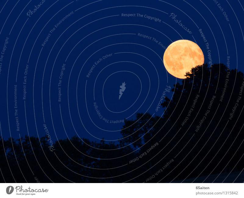 Fly me to the moon Himmel Natur blau schön ruhig Wald schwarz Umwelt gelb Zeit Luft leuchten Idylle gold ästhetisch Schönes Wetter