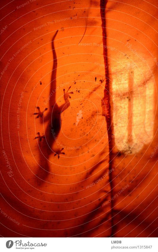 Gecko à l'orange - 2 Tier 1 Echte Eidechsen Echsen Reptil Saugnapf Stoff Lampe Lampenschirm Urwald Thailand Klettern kopfvoran verstecken Wärme Warmes Licht
