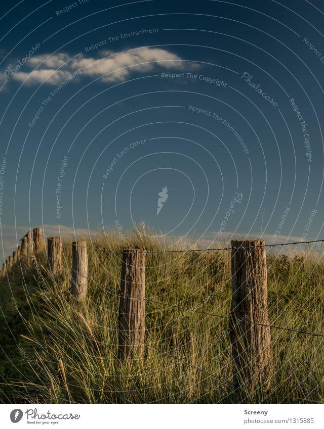 Über die Düne... Himmel Natur Ferien & Urlaub & Reisen blau Pflanze grün Sommer Landschaft ruhig Wolken Küste Tourismus Idylle Ausflug Schönes Wetter Zaun