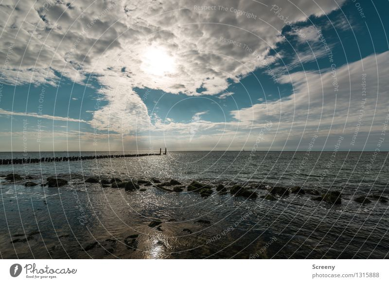 Ebbe Himmel Natur Ferien & Urlaub & Reisen Pflanze Sommer Wasser Sonne Erholung Meer Landschaft ruhig Wolken Strand Küste Freizeit & Hobby Tourismus