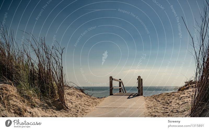 Ab zum Meer... Himmel Natur Ferien & Urlaub & Reisen blau Pflanze Sommer Wasser Landschaft ruhig Ferne Strand gelb Gras Wege & Pfade Küste