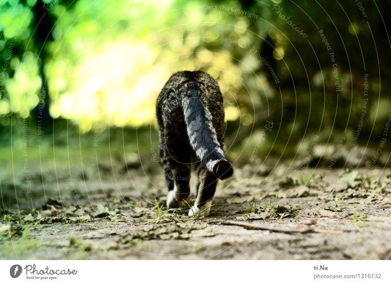 Go your own way Katze grün Sommer Blatt ruhig Tier Wald Gefühle Wiese Herbst Gras Garten Freiheit gehen wild Idylle