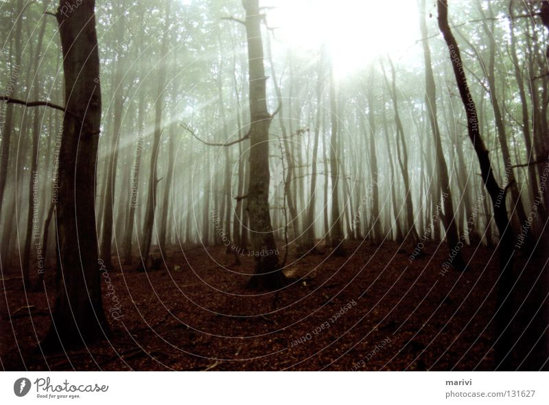 Geisterwald Baum Sonne Ferien & Urlaub & Reisen Wald Herbst Deutschland wandern Nebel Insel Spaziergang Baumstamm Geister u. Gespenster Gegenlicht mystisch Rügen spukhaft