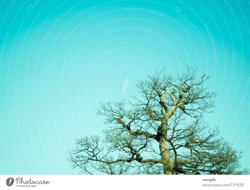Uralte Eiche Baum Eichenwald Sonne Eichenblatt Blatt Baumstamm Baumkrone Blätterdach Natur Pflanze Laubbaum grün Baumrinde Wachstum Ast verästelt Zweig