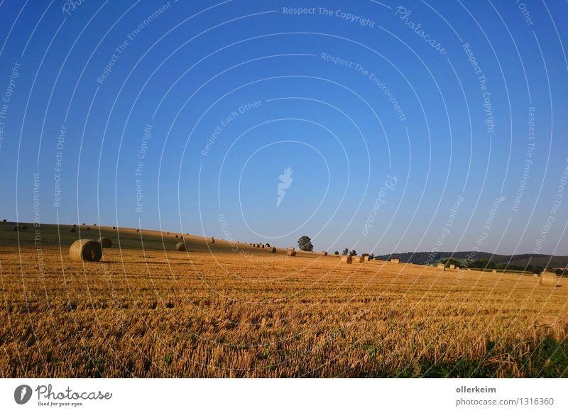 Acker mit Strohballen - beim Sonnenaufgang Himmel Natur blau Sommer Erholung Landschaft Umwelt Herbst braun Stimmung Luft Wetter Feld Erde wandern gold
