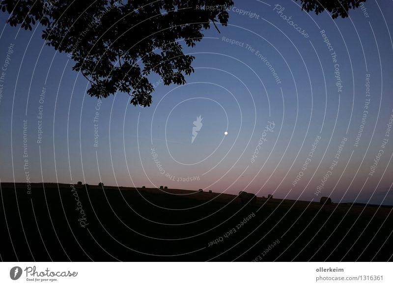 Morgengrauen im Angesicht des Mondes Ausflug Ferne Freiheit wandern Landwirtschaft Forstwirtschaft Umwelt Natur Landschaft Luft Himmel Wolkenloser Himmel