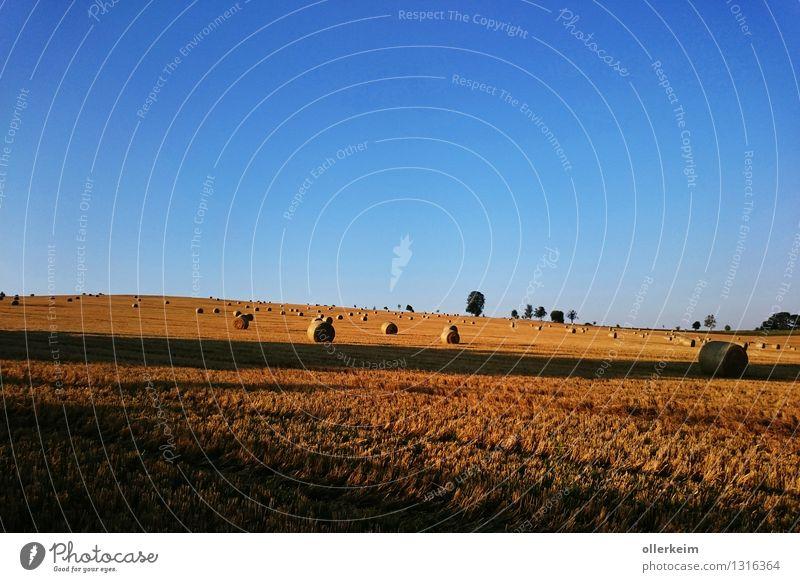 Goldröllchen im Morgenlicht Natur blau schön Sommer Erholung ruhig Herbst braun Stimmung gehen Horizont Feld Erde gold genießen Ausflug
