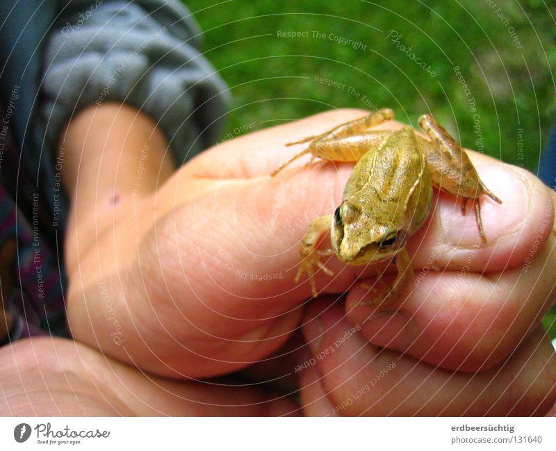 Kiss me! Kind Hand grün springen Spielen Gras Luft klein wandern Finger frisch Spaziergang Neugier Kindheit Frosch
