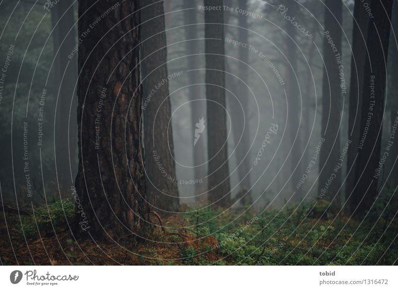 Wald im Nebel Natur Landschaft Pflanze Urelemente Herbst schlechtes Wetter Baum Gras Sträucher Moos Hügel dunkel Einsamkeit einzigartig Endzeitstimmung