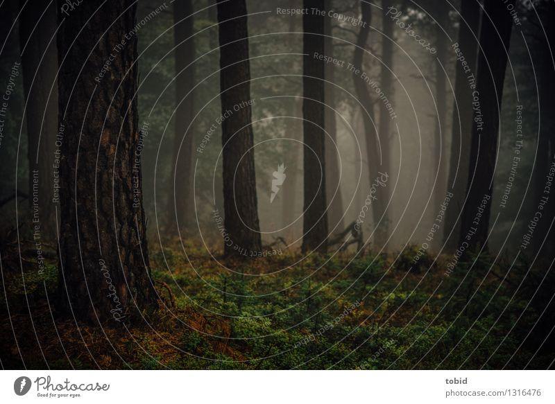 Dämmerung Natur Landschaft Pflanze Herbst Nebel Baum Gras Sträucher Moos Wald dunkel Wärme Einsamkeit Idylle Dunst herbstlich mystisch Farbfoto Außenaufnahme