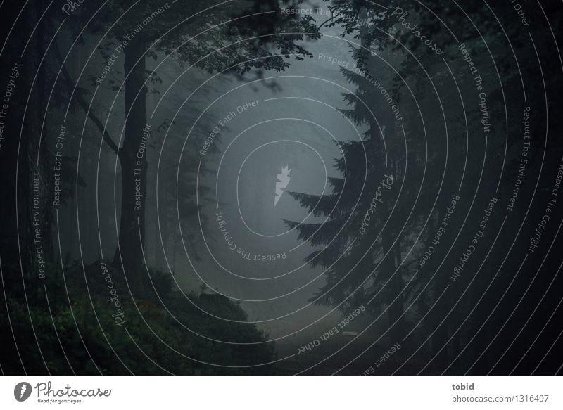 Dunkle Pfade Natur Landschaft schlechtes Wetter Nebel Baum Gras Sträucher Moos Farn Tanne Nadelbaum Wald Hügel bedrohlich dunkel gruselig kalt Einsamkeit