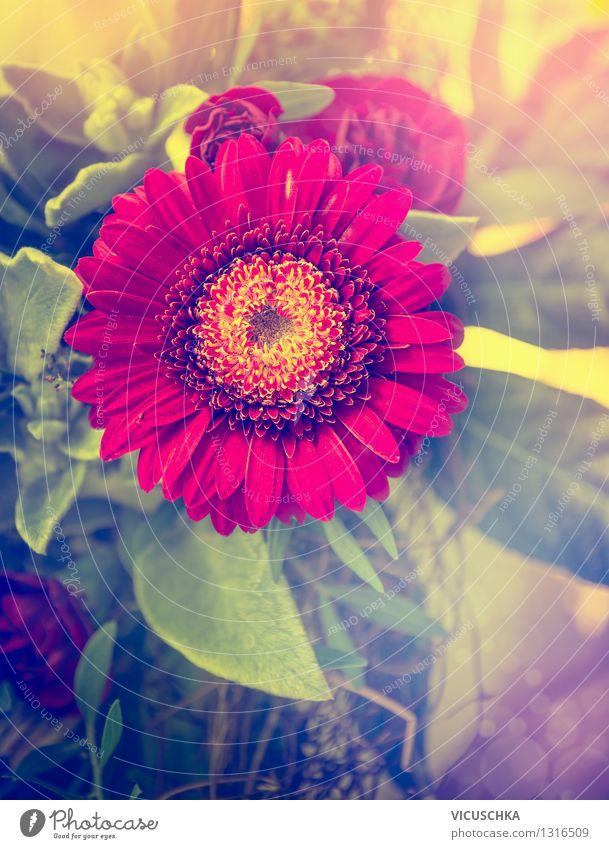 Rote Gerbera Blume Natur Pflanze schön Sommer Blume Blatt Blüte Liebe Stil Hintergrundbild Garten Lifestyle Design Dekoration & Verzierung Geschenk Blumenstrauß