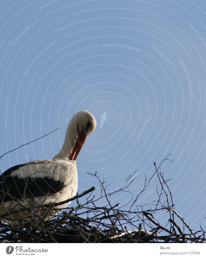 Schönheitspflege schön Einsamkeit Wolken Frühling Vogel Wohnung Geburtstag Sträucher Ast Zweig Schnabel Blauer Himmel Geburt Nest Storch Federvieh