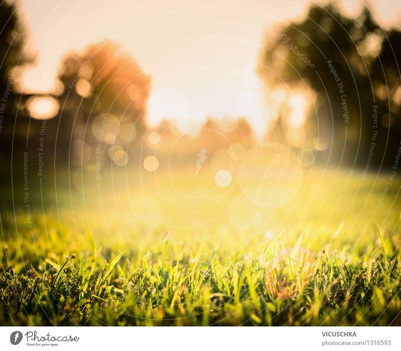 Schöner Rasen und Sonnenuntergang auf Natur Hintergrund Pflanze grün Sommer Baum Landschaft ruhig gelb Wärme Wiese Herbst Gras Hintergrundbild Garten Park