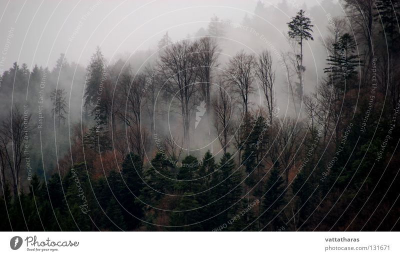 Nebel des Grauens... Natur