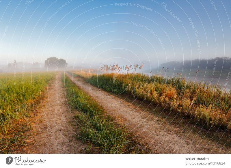 Morgen in der Nähe von Berezino Himmel Natur Pflanze blau grün schön Sommer Wasser Baum Landschaft Wald gelb Wiese Gras Stimmung Sand