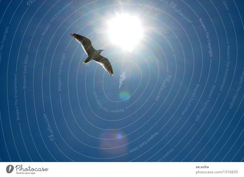 Free like a bird Tier Vogel Flügel 1 Bewegung entdecken fliegen leuchten Ferien & Urlaub & Reisen einfach glänzend Unendlichkeit maritim natürlich oben positiv