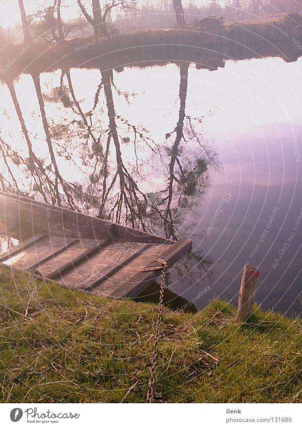 Boot grün Wiese Frühling März April Mai Abendsonne Baum Wald Wellen Reflexion & Spiegelung Wasserspiegelung Wolken Bot Natur Rhein Freiburg im Breisgau Carmen