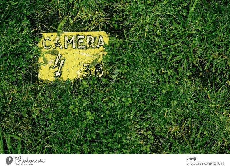 camera grünura gelb Gras Kunst Freizeit & Hobby Fotografie Schilder & Markierungen nass 3 frisch Schriftzeichen Buchstaben Ziffern & Zahlen Kultur Bild Rasen