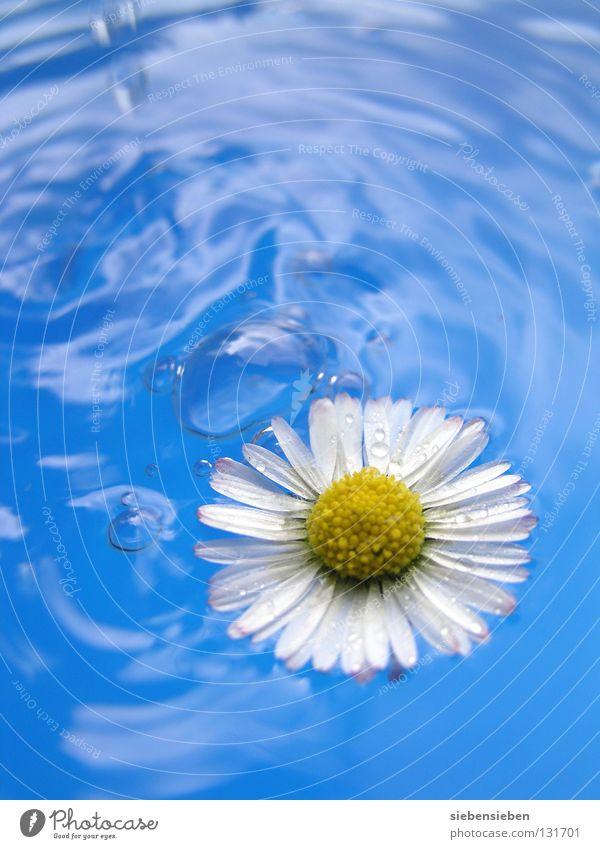 farbenfreudig Natur blau Wasser schön Pflanze Sommer Blume Freude gelb Erholung Umwelt Gefühle Freiheit Frühling Glück Blüte