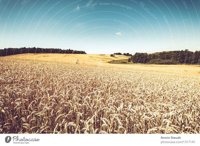 Korn und so Lebensmittel Getreide Essen Reichtum Gesunde Ernährung Ferne Sommer Umwelt Landschaft Wolkenloser Himmel Horizont Schönes Wetter Pflanze Nutzpflanze
