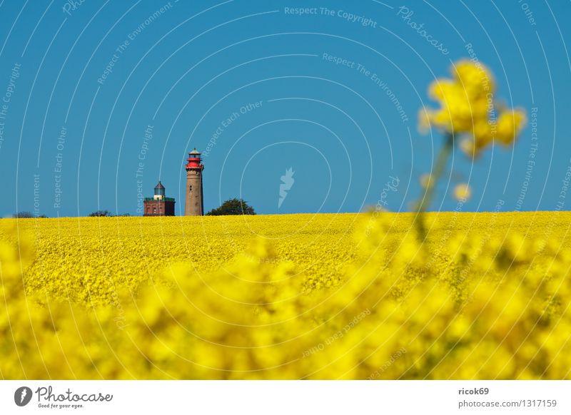 Raps und Leuchttürme Sommer Landwirtschaft Forstwirtschaft Natur Landschaft Wolkenloser Himmel Feld Leuchtturm Sehenswürdigkeit Wahrzeichen blau gelb