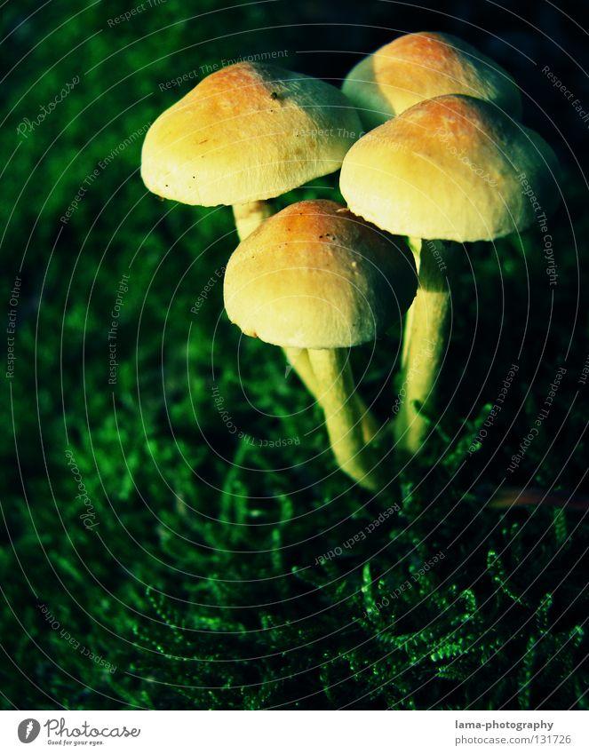 Small Invaders Gras grün Sonnenschirm klein winzig Umwelt Pflanze Wachstum Partnerschaft Schutz Beschützer Kontrolle Herbst Fliegenpilz Mütze Baseballmütze