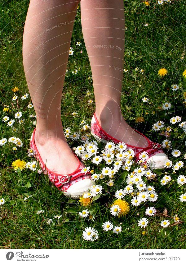 Teppich made by nature Schuhe rot grün Gänseblümchen Löwenzahn Wiese schön Schönes Wetter Blume Blumenteppich Flowerpower Hippie stehen gehen Wade fest Freude