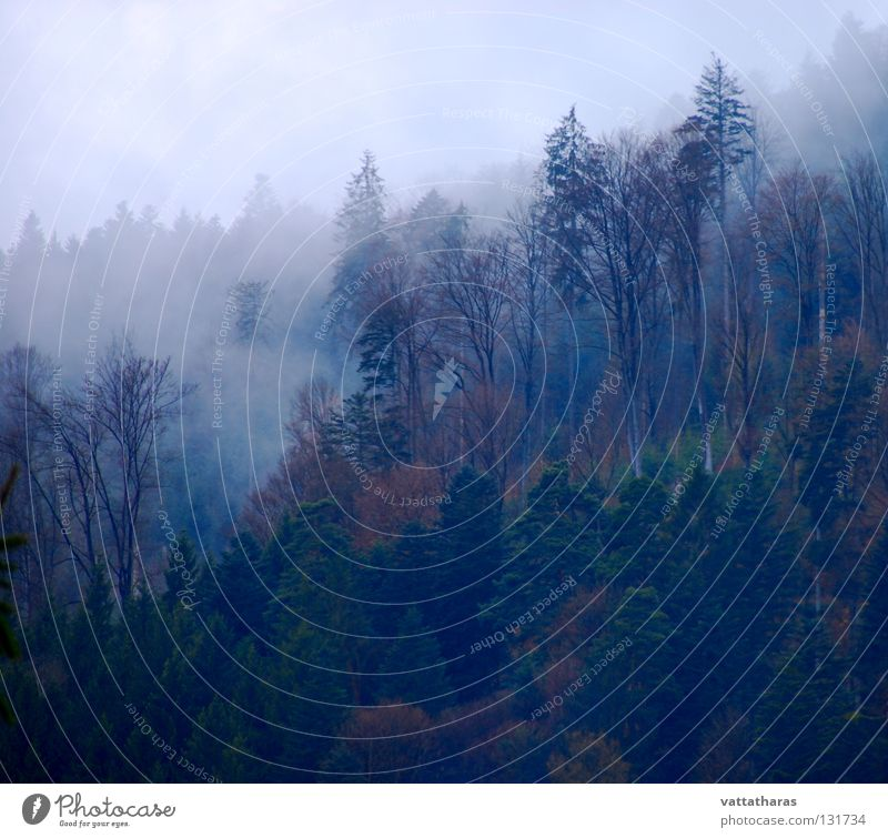 Nebel des Grauens... Part 2 7°clock Morning In The Blackforest Fog Flowing Through Trees