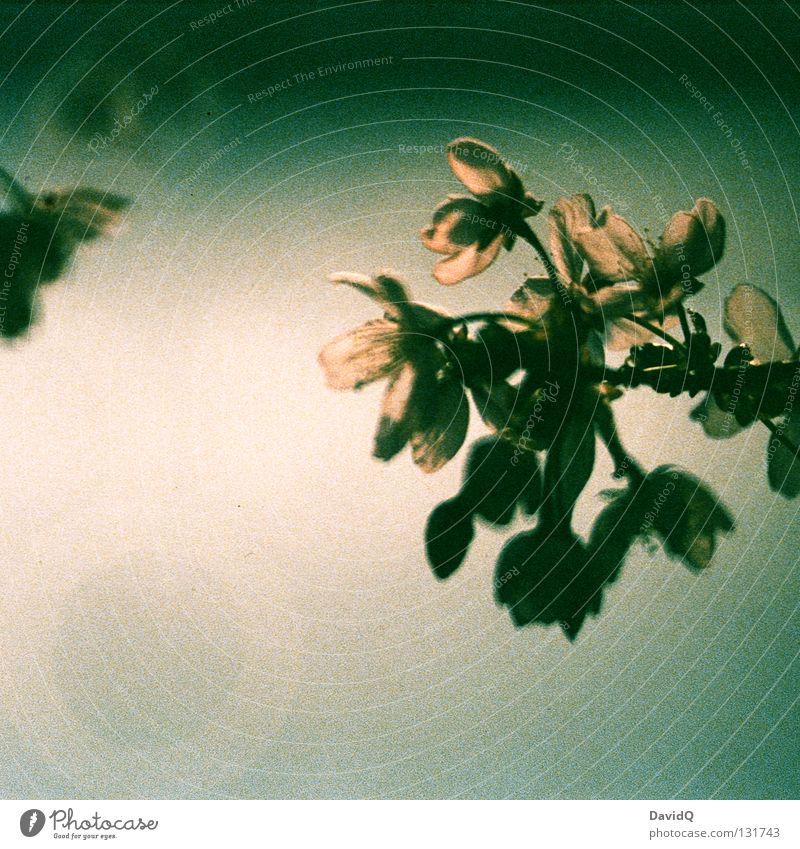 das frühjahrswarten Frühling Jahreszeiten Blüte Baum Blühend aufwachen zart zierlich frisch Vergänglichkeit Baumblüte Ast Zweig Blütenknospen
