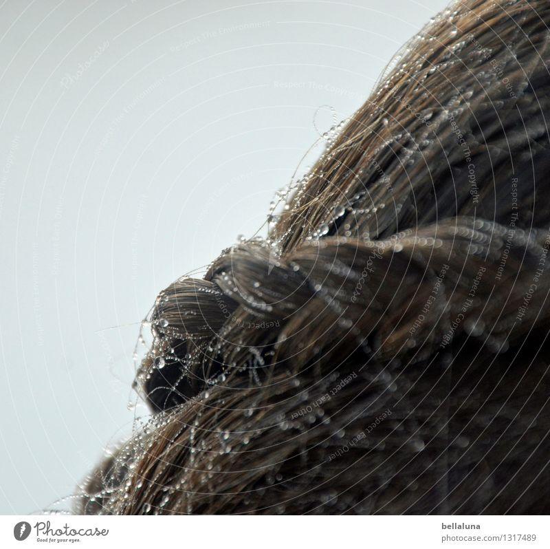 Diadem Mensch feminin Kind Mädchen Junge Frau Jugendliche Kopf Haare & Frisuren 1 8-13 Jahre Kindheit Wasser Wassertropfen Himmel Wolkenloser Himmel Frühling