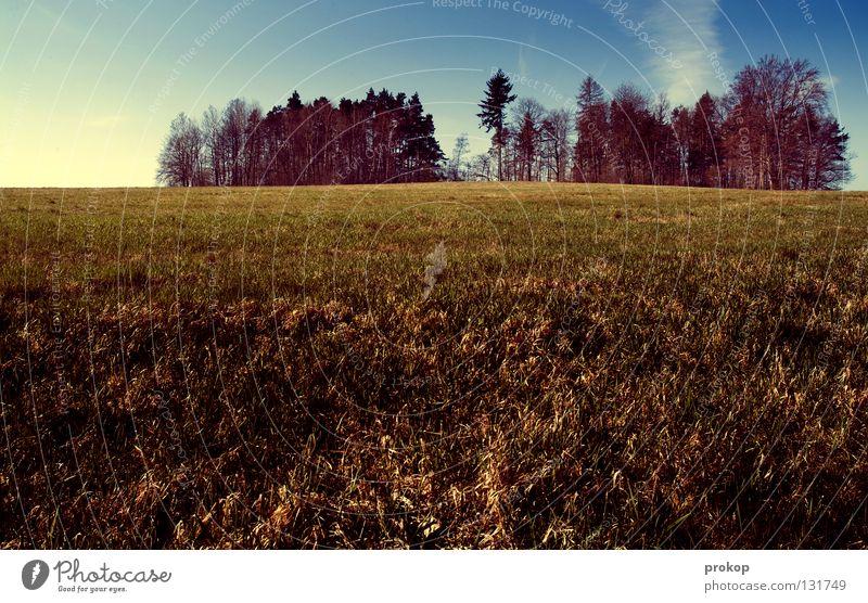 Unsere Erde - Neural Disturbance Wiese Gras Baum Wald grün frisch Horizont Wolken Ferne ruhig Ferien & Urlaub & Reisen Erholung Sehnsucht Wildnis Himmel