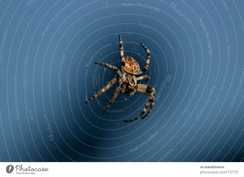 die spinne im küchenfenster 2 dunkel Fenster Netz Insekt Jagd Spinne