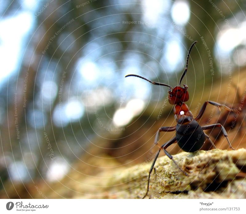 aufs maul Baum braun Angst Panik Ameise Säure