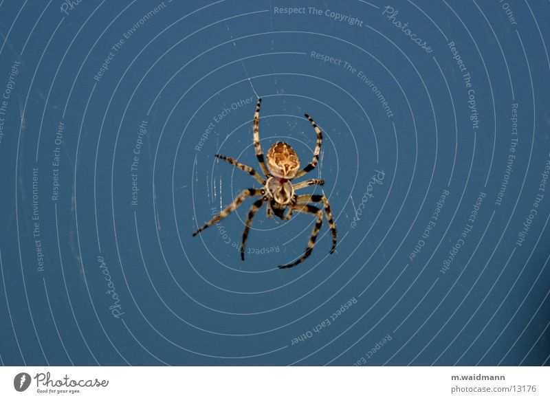 die spinne im küchenfenster 1 dunkel Fenster Netz Insekt Jagd Spinne