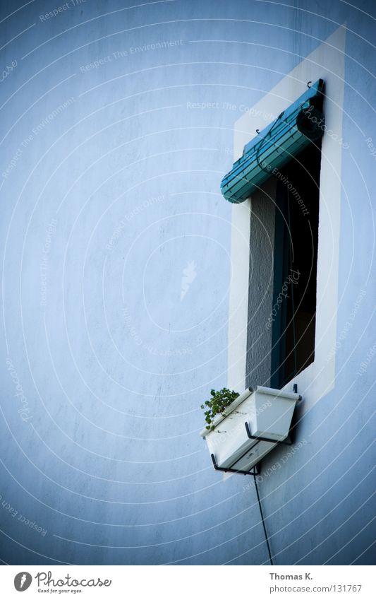 Lebenszeichen weiß Blume blau Pflanze Einsamkeit Fenster Mauer Kabel Italien Spanien Putz Griechenland mediterran Fensterladen Fensterbrett Rollo