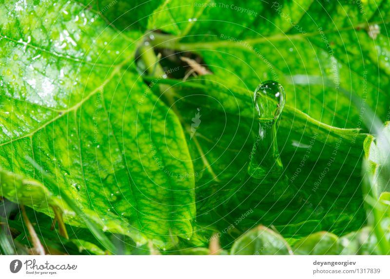 Wassertropfen in der Natur Umwelt Pflanze Regen Blatt Tropfen frisch hell nass Sauberkeit blau grün Reinheit Farbe Hintergrund übersichtlich Regentropfen