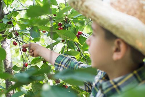 Kind Natur grün Sommer Baum Hand rot Freude Mädchen Essen klein Familie & Verwandtschaft Garten Frucht frisch Kindheit