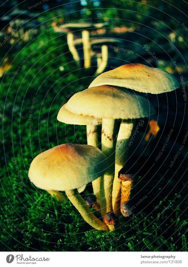 1001 Credits - Small Invaders II Gras grün Sonnenschirm klein winzig Umwelt Pflanze Wachstum Partnerschaft Schutz Beschützer Kontrolle Herbst Fliegenpilz Mütze