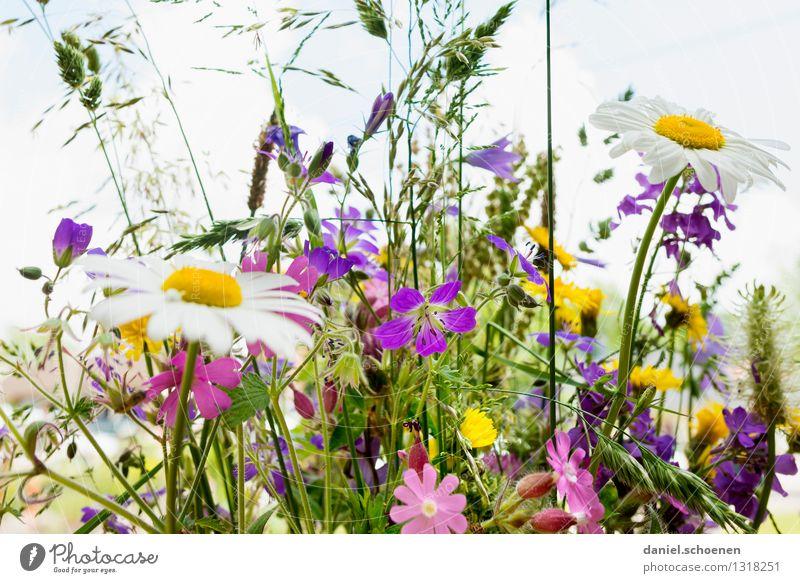 der Sommer ist nicht mehr weit Pflanze Blume Gras Blumenstrauß Fröhlichkeit frisch hell schön mehrfarbig Farbe Farbfoto