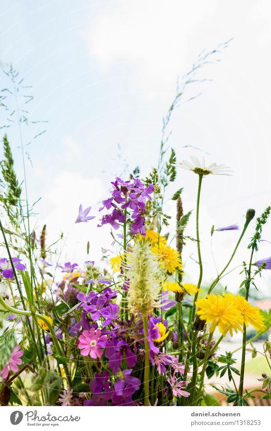 Sommer in Sicht Natur Pflanze Blume Gras Blatt Blüte Duft hell mehrfarbig gelb grün violett rosa Leichtigkeit Farbfoto Menschenleer Textfreiraum oben